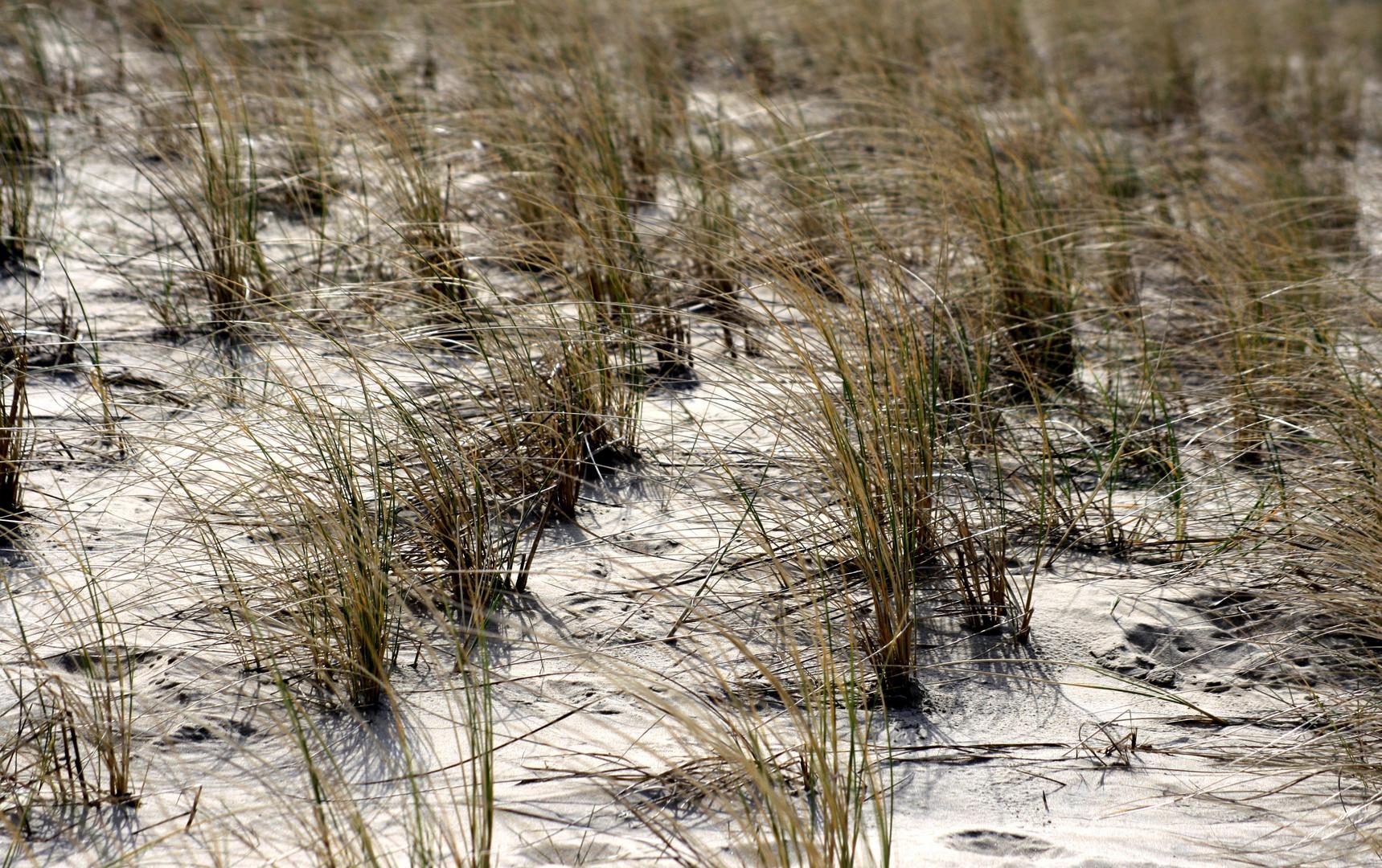 Das Grüne im Sand