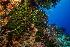 Das grüne Riff