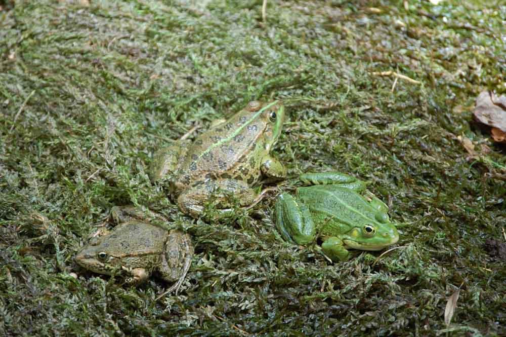 Das grüne Trio
