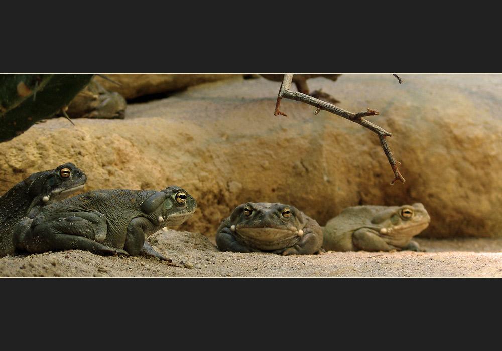 Das gruppendynamische Krötenquartett