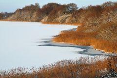 Das Haddebyer Noor bei Schleswig im Winter
