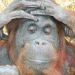 Das hält doch kein Affe aus....