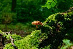 Das häßliche Pilzlein