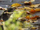 Das Herbst Gesicht