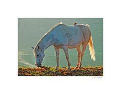 - das Herbst-Pferd -