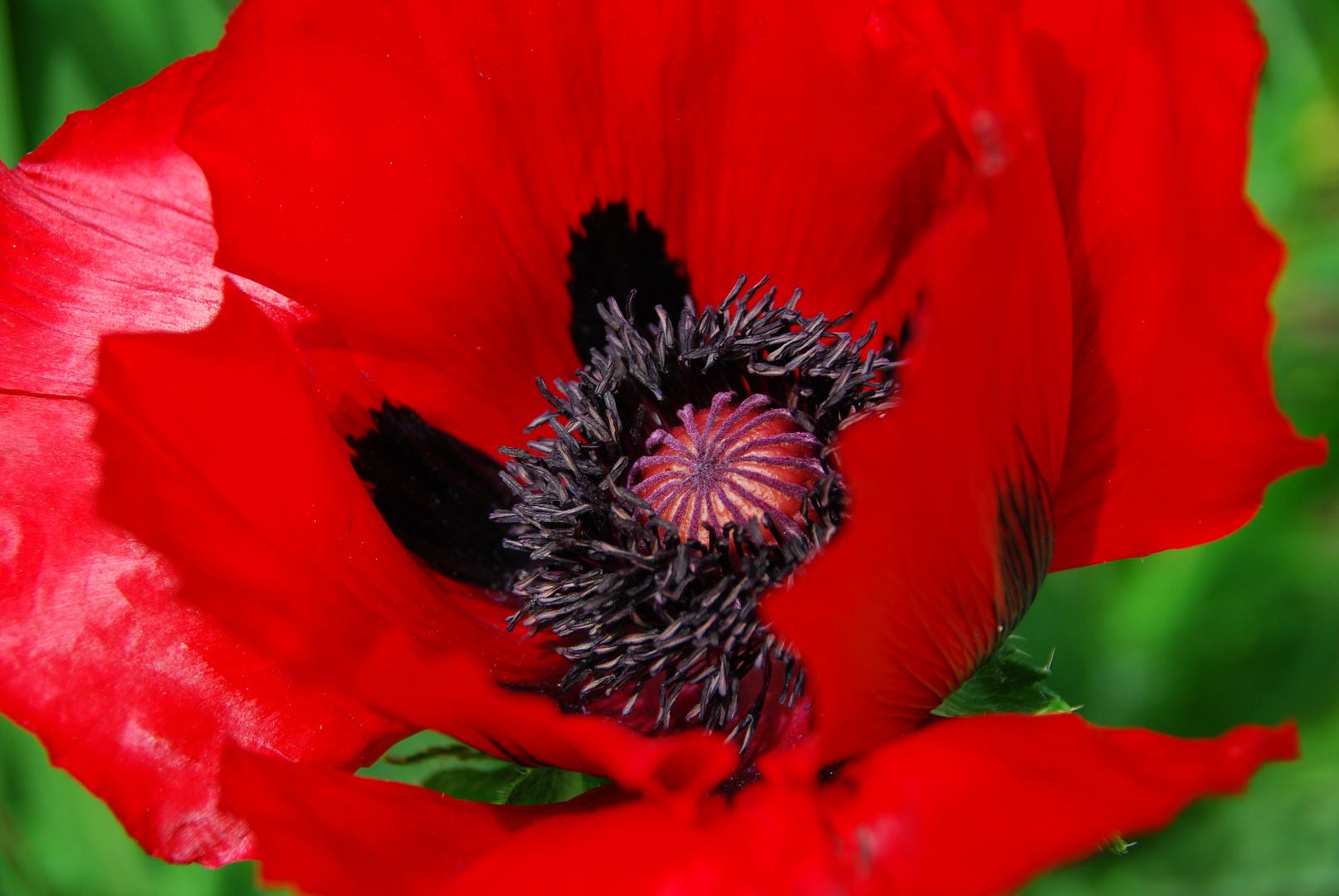 das Herz der Blüte