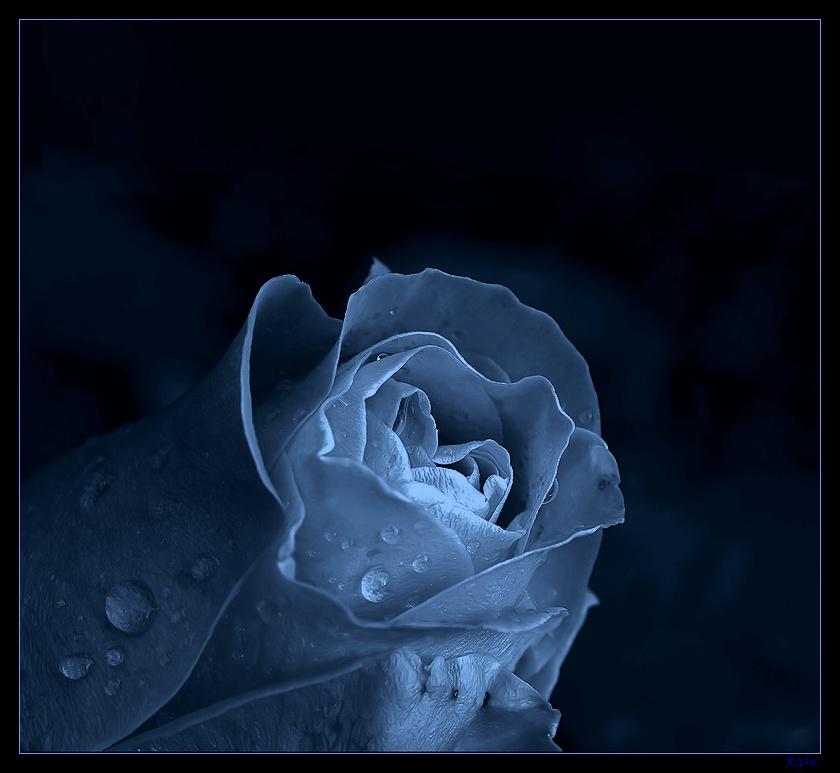"""""""Das Herz der Rose"""""""