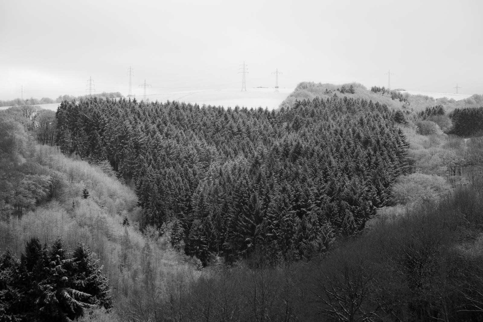Das Herz des Waldes