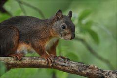 Das Hörnchen war heute wieder unterwegs ...