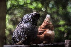 Das Huhn in der Kunst