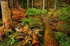 Das Ilsetal im Herbst