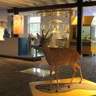 das Informationszentrum Meijendel