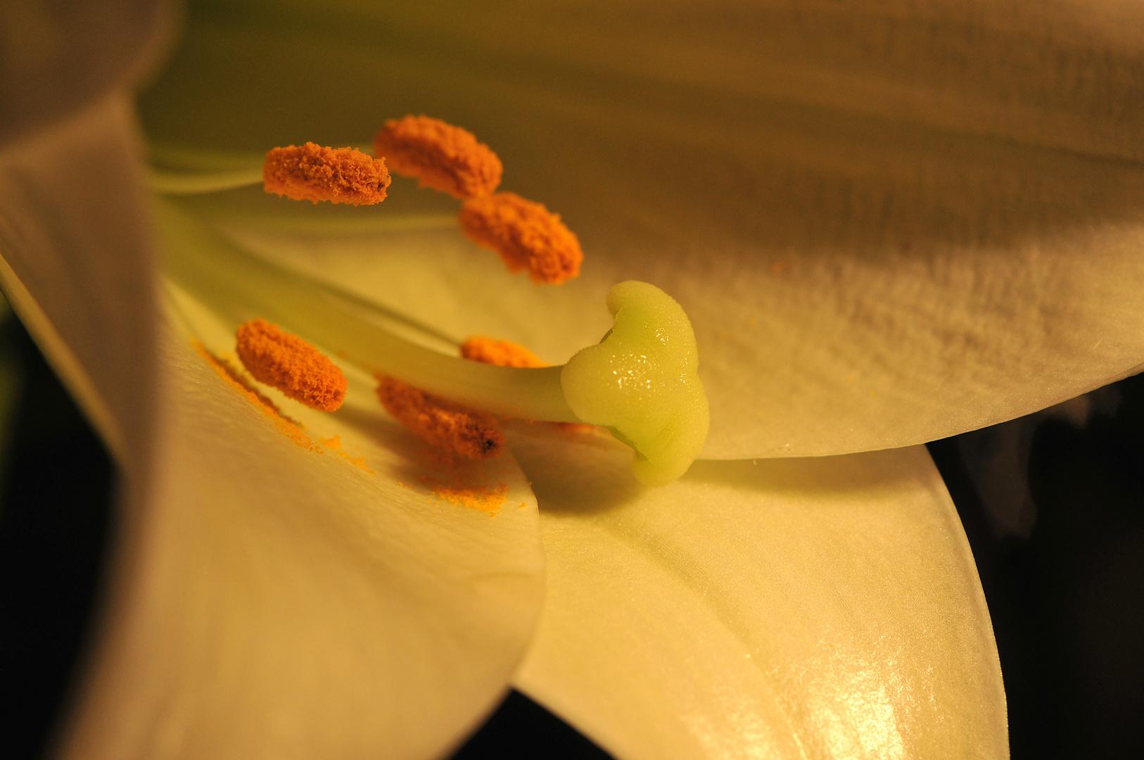 Das Innerste der Lilie
