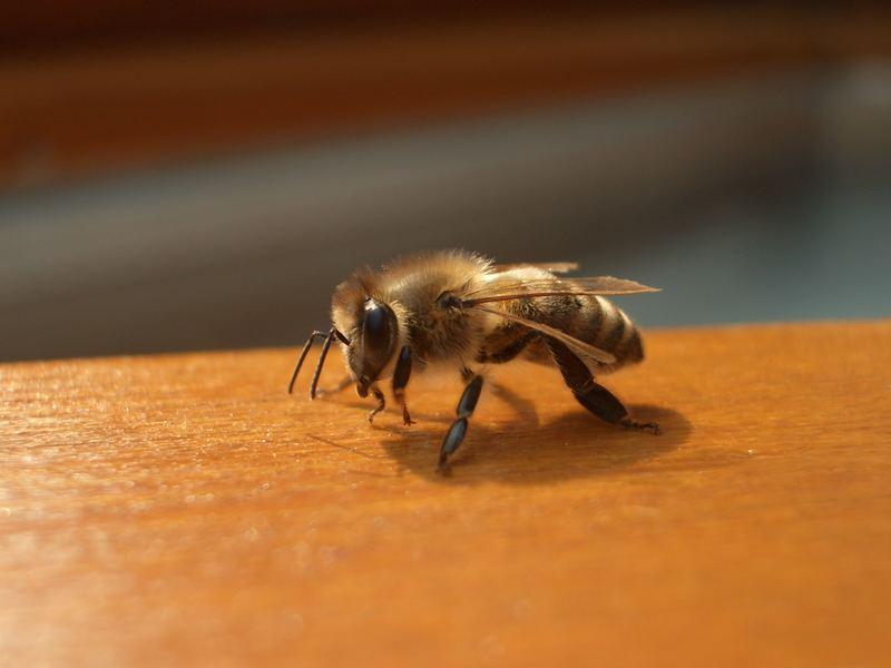 das ist aber ein scharfes Bienchen