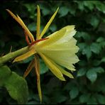 Das ist die schönste Blüte ...