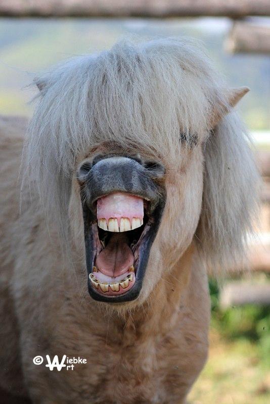 Das Ist Doch Zum Lachen Foto Bild Tiere Haustiere Pferde Esel