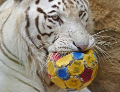 Das ist jetzt mein Ball........