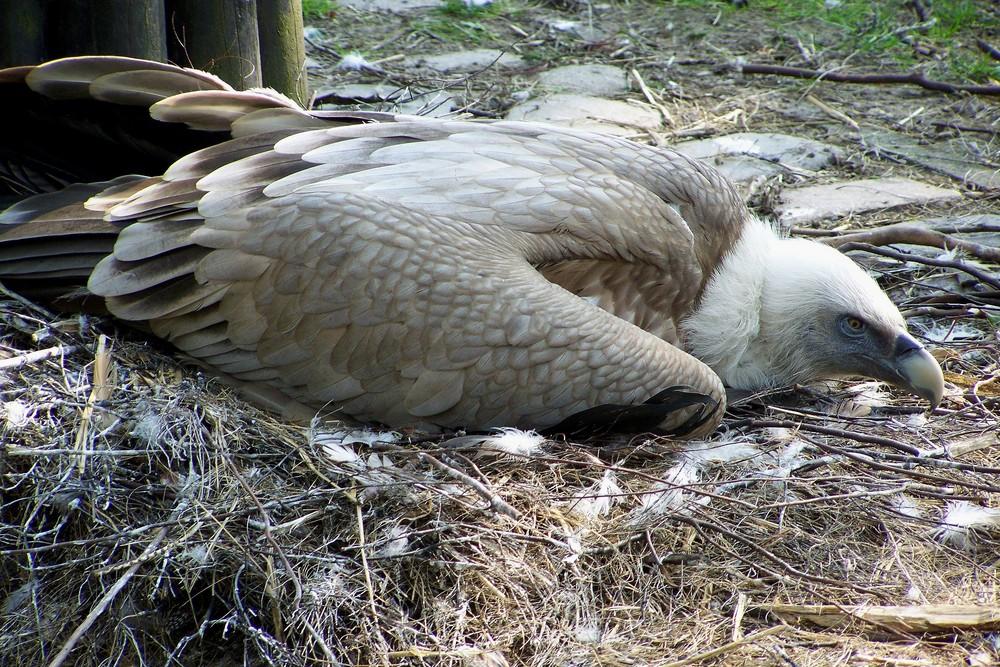 Das ist mein Nest!