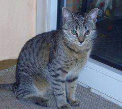 """das ist """"Roberta"""", die Katze m. Sohnes"""