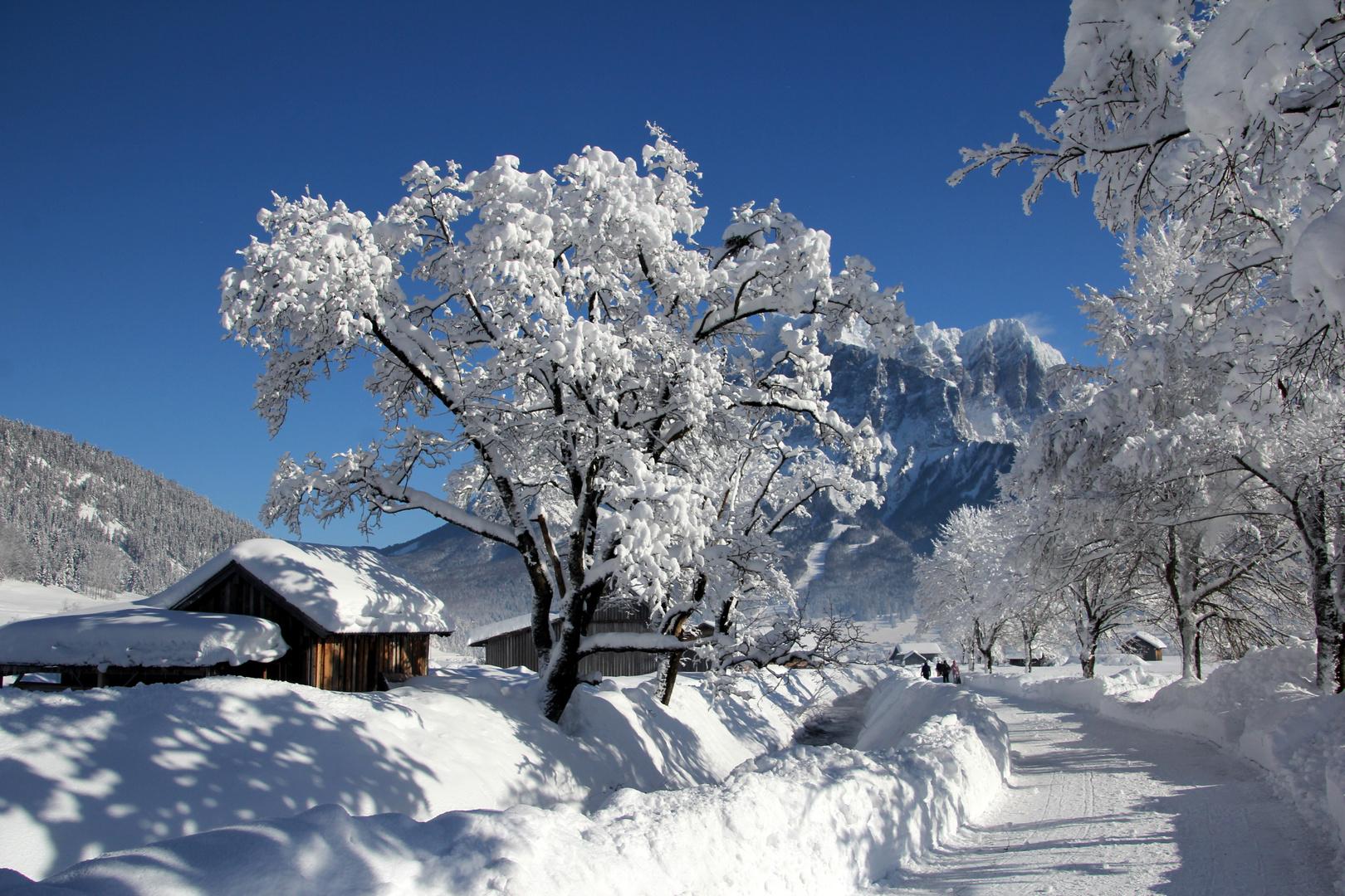 das ist winter wie er sein soll foto  bild  landschaft