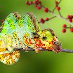 Das Kameleon