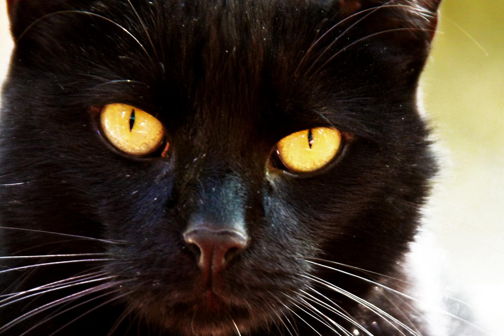 Das Katzenmodel...