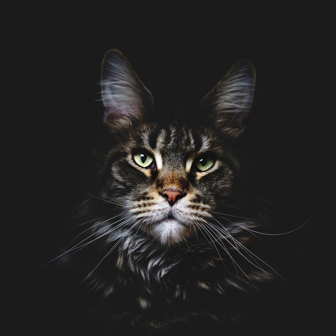 Das Katzenportrait