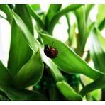 das kleine käferlein im grossstadtjungel