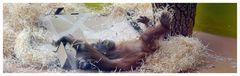 das kleine Orangutanmädchen