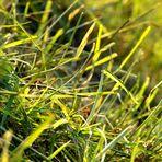 Das kleine Rasenstück....