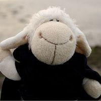 Das Kleine Schaf