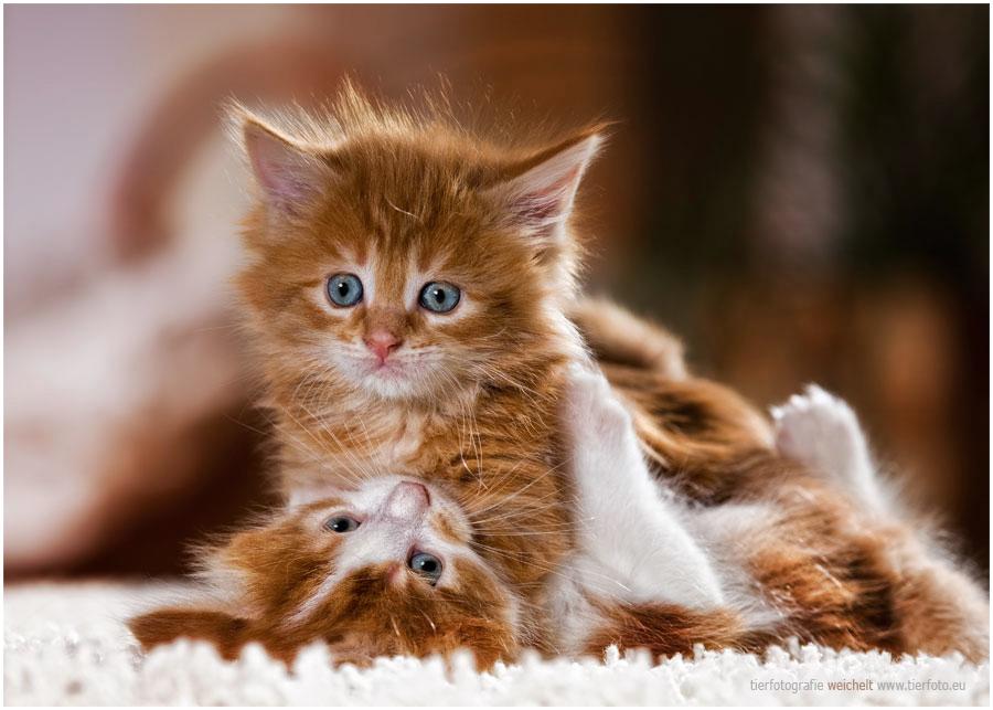 Das kleinste Katzentier ...