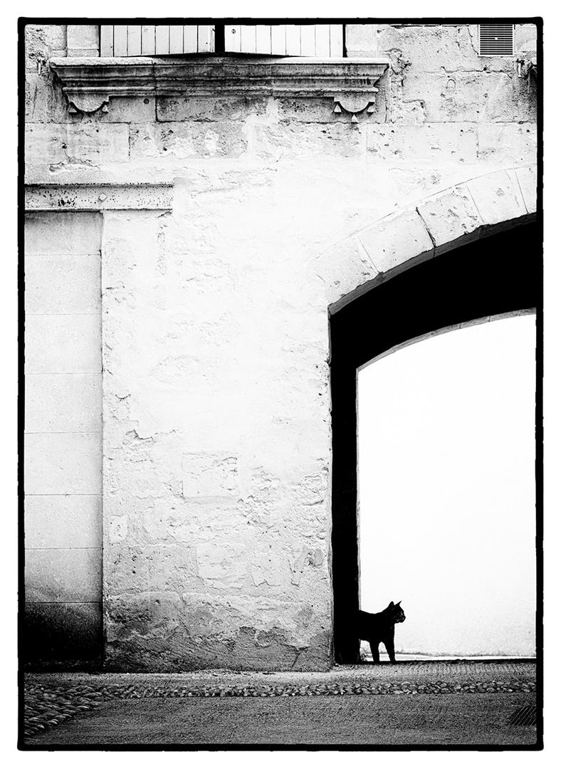 »Das kleinste Katzentier ist ein Meisterstück.«
