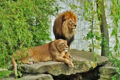 Das Königspaar
