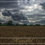 Das Kornfeld