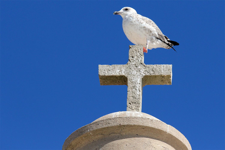 """""""Das Kreuz mit der Möwe..."""""""