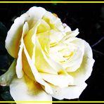 Das Lächeln der Rose
