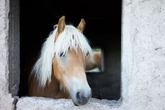 das lange Pferd