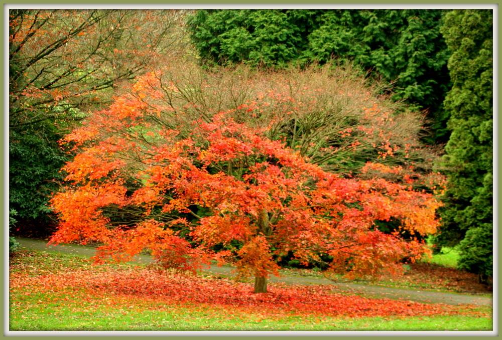 """""""Das lautlose Fallen der Blätter vom Baum. Ich gebe all dieser Schönheit Raum"""" © Irmgard Adomeit"""