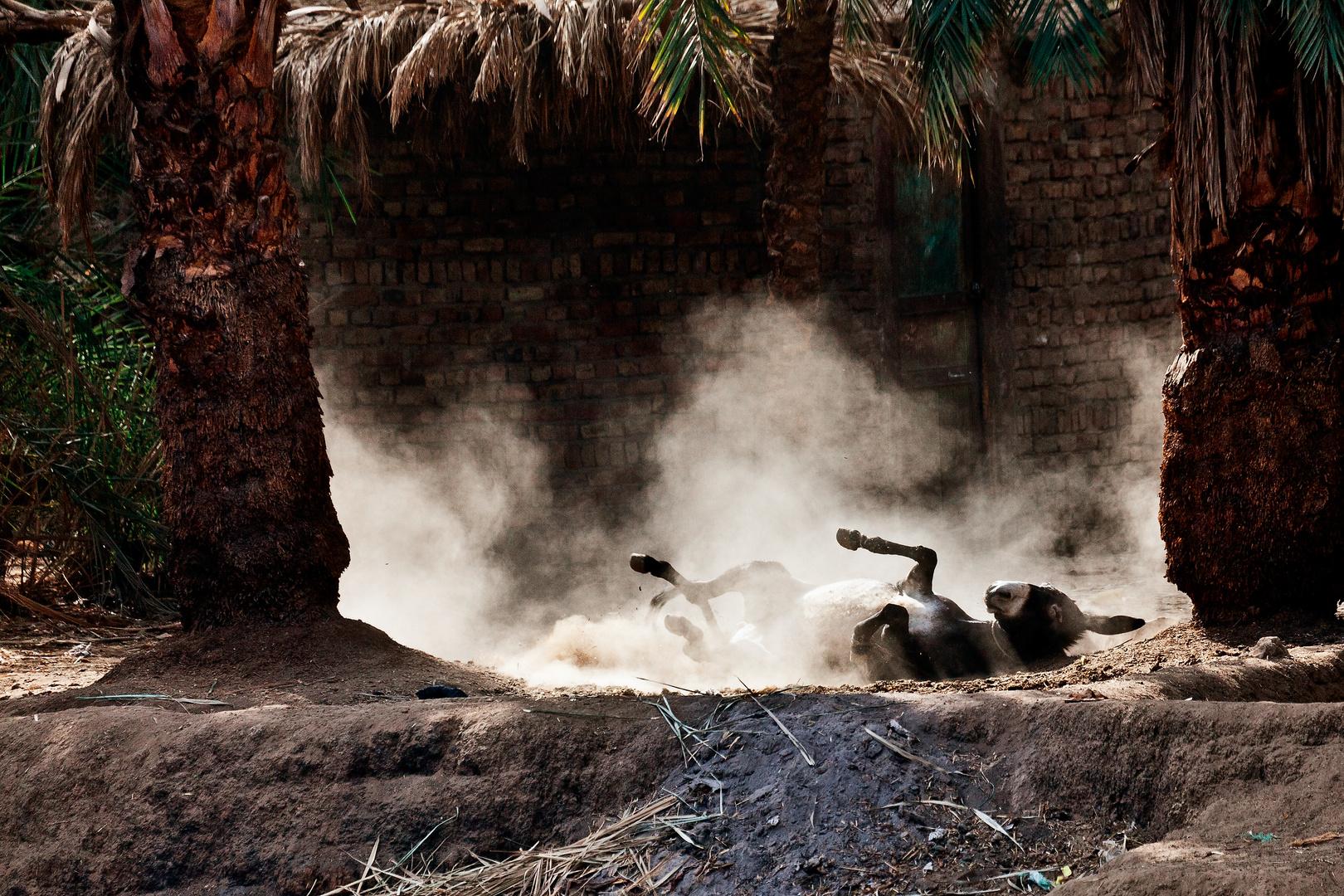 Das Leben am Nil (82)
