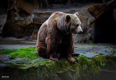 Das Leben im Zoo macht traurig