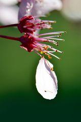 Das letzte Blütenblatt, und dann?