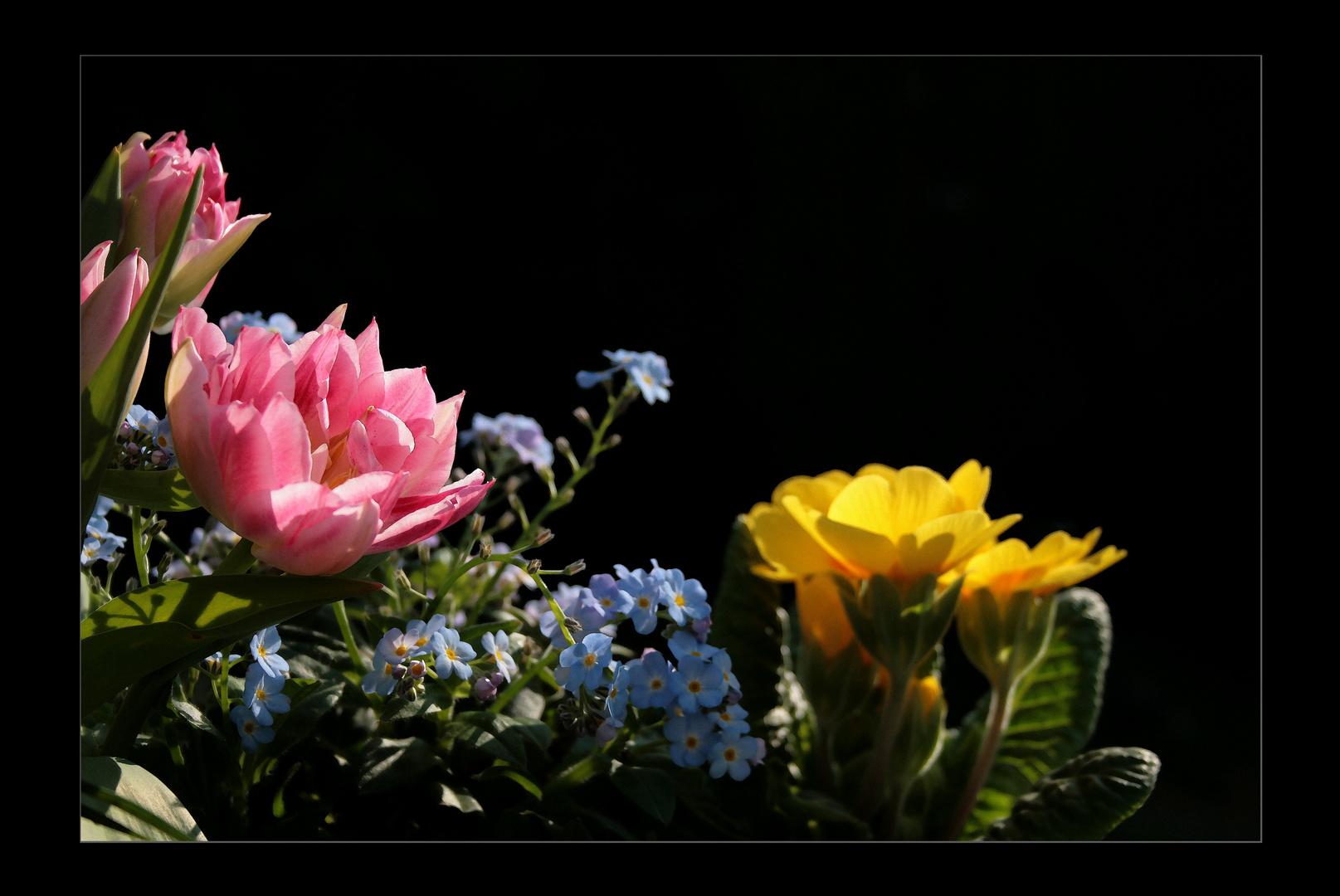 das leuchten foto bild pflanzen pilze flechten bl ten kleinpflanzen tulpen bilder. Black Bedroom Furniture Sets. Home Design Ideas