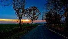 ... das Leuchten des Laubes ...