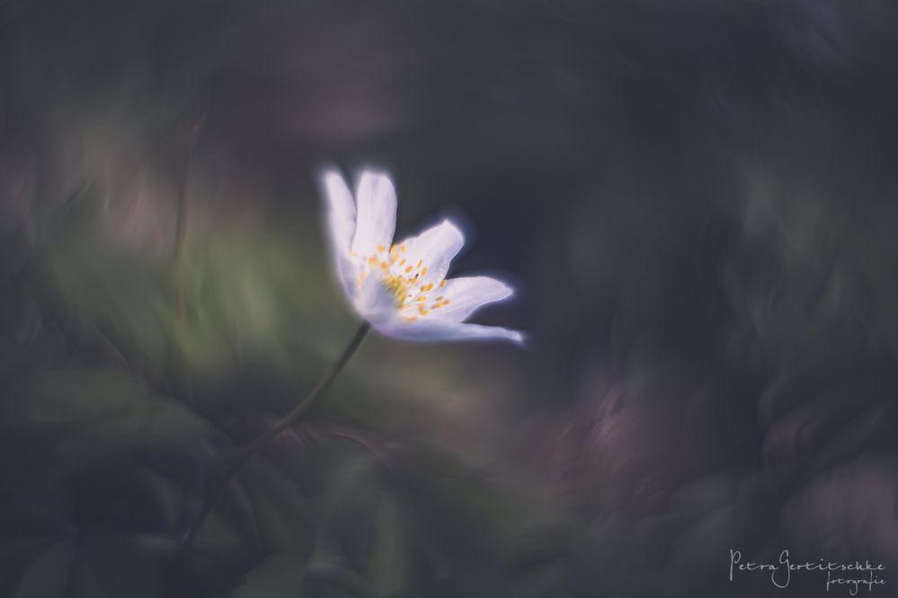 ... das Leuchten des Waldes ...