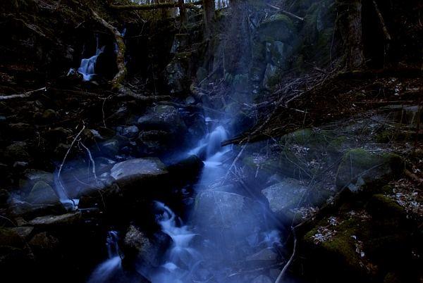 Das Leuchten im Wald