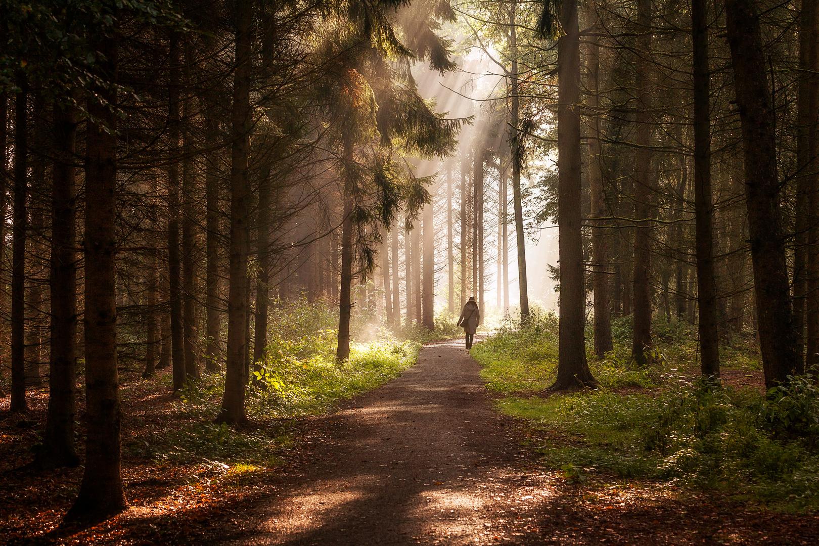 Das Licht der Hoffnung