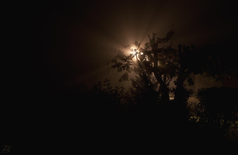 Das Licht im Dunkeln