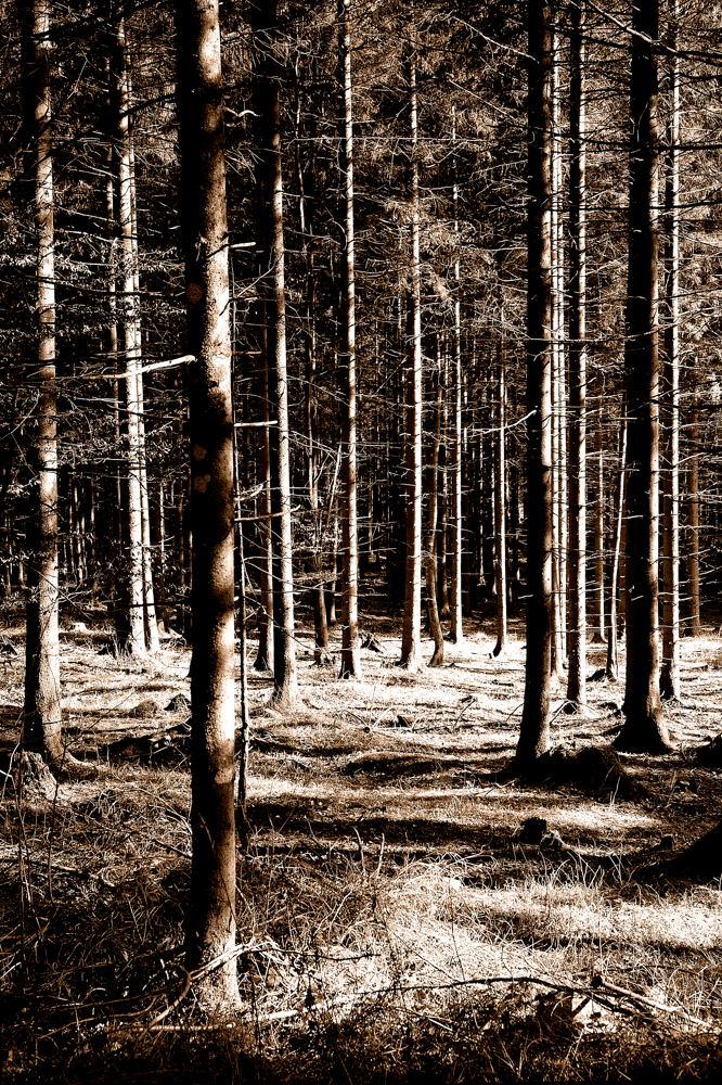 Das Licht im Wald