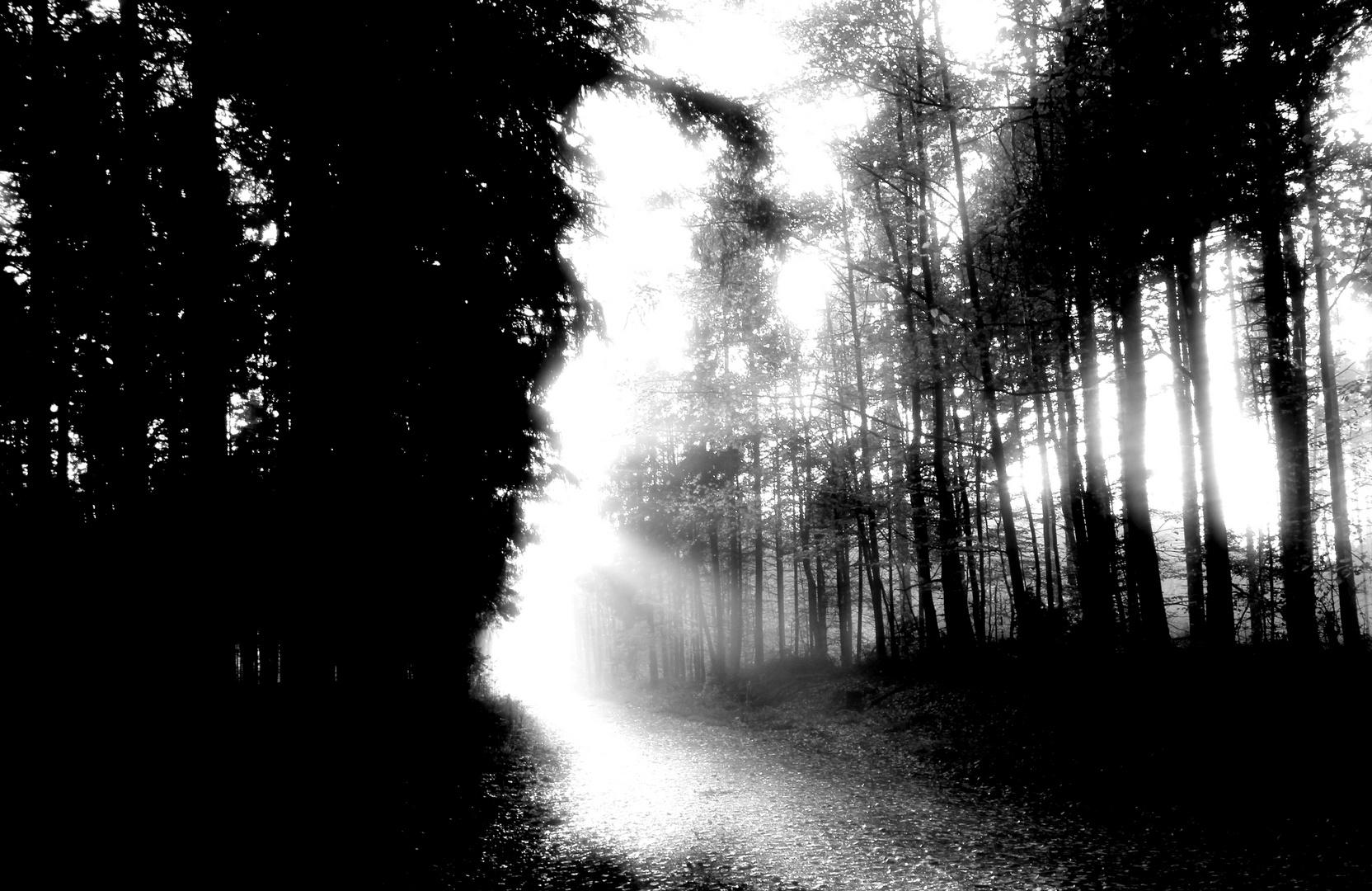 Das Licht teilt den Wald
